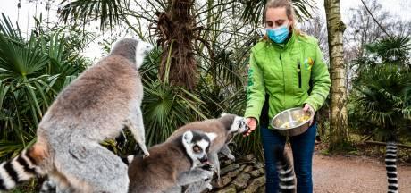 Vogelpark Avifauna hoopt op nieuwe overheidssteun: 'Vooral omdat onzeker is wanneer we weer open kunnen'