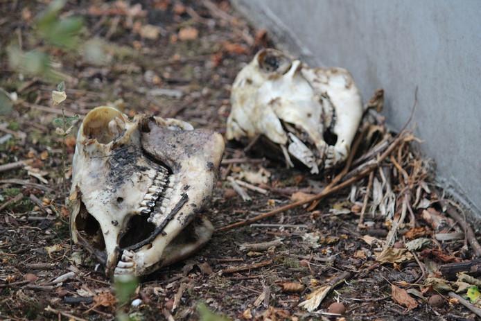 De schedels werden gevonden door spelende kinderen.