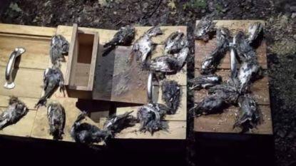 Dierenbeul actief in Houthulst: 22 vinken onthoofd, kooien kapot gestampt