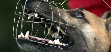 Gemist? Agenten zien drugsdeal voor hun ogen gebeuren en Den Haag wil agressieve honden muilkorven