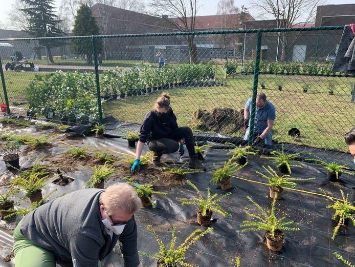 1.100 planten, struiken en bomen werden aangeplant op Campus Boomgaard