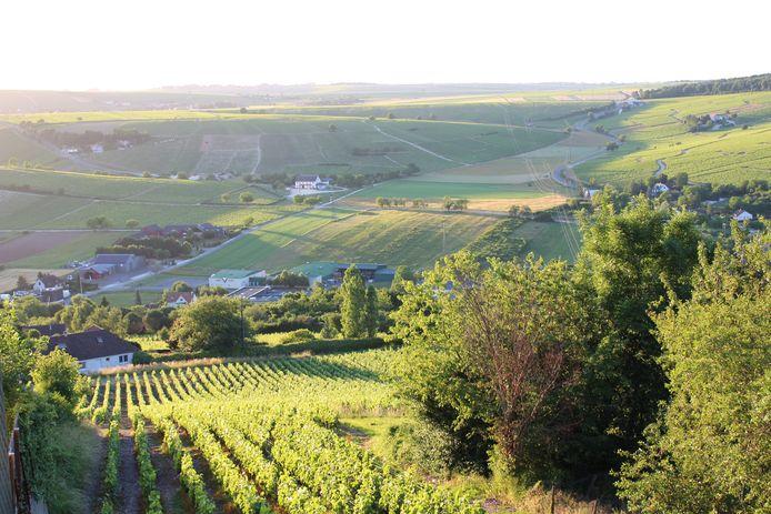 Wijngaard in Sancerre (Frankrijk).