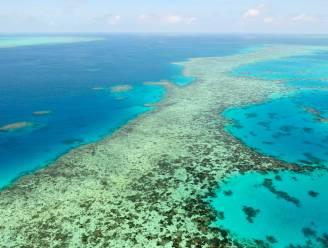 """Unesco klasseert Groot Barrièrerif als """"in gevaar"""", Australië niet akkoord"""