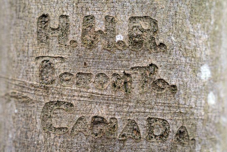 Roszells nicht Heather kwam naar Eelde om met eigen ogen de boom te zien.  Beeld Reyer Boxem