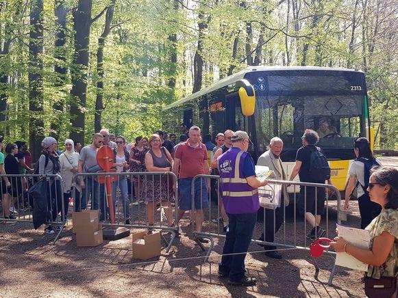 De hyacintenbus bleek tijdens het paasweekend erg populair om het Hallerbos te bezoeken tijdens het Hyacintenfestival.