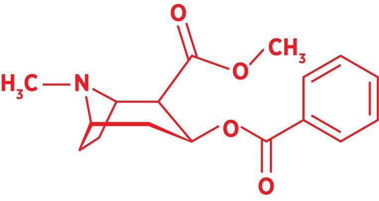 De structuur van cocaïne.  Beeld Sander Soewargana