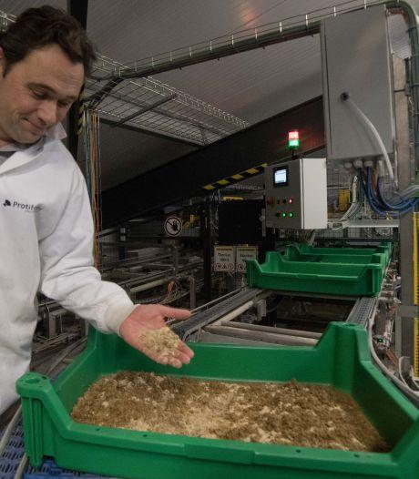Insectenkweker Protifarm in Ermelo wil tweede fabriek bouwen na belangrijke Europese goedkeuring
