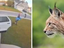 Une femme attaquée par un lynx roux devant chez elle