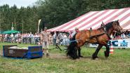 20.000 bezoekers genieten van plattelandsleven op Alkense Oogstfeesten