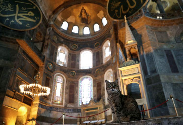 Poes Gli, vaste bewoner van de Hagia Sophia, in de voormalige kathedraal die vanaf vrijdag weer dienst doet als moskee.  Beeld Reuters