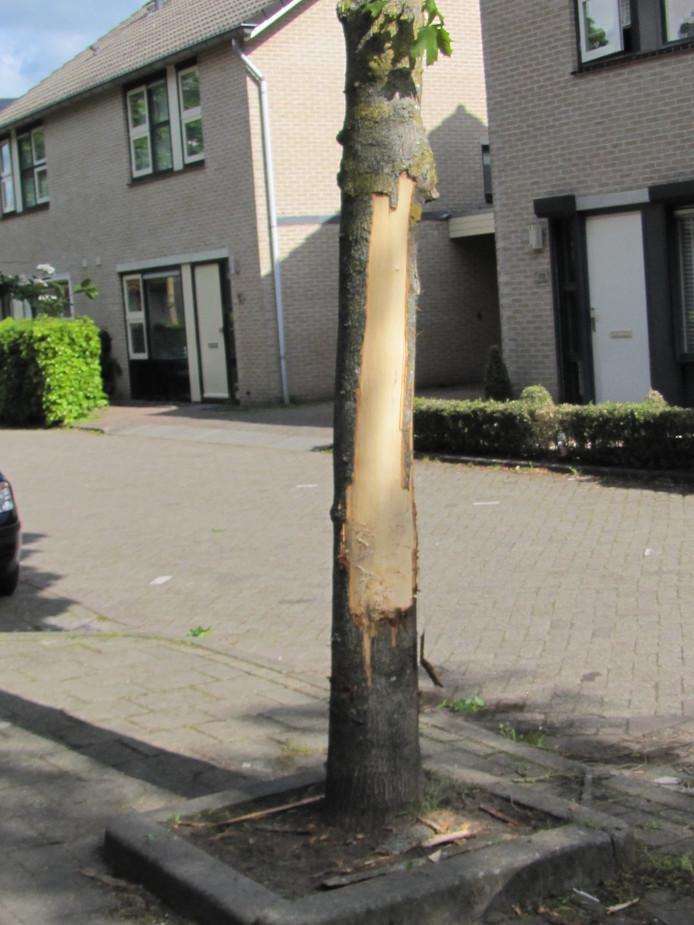 De toegetakelde boom aan de Lange Zandstraat.