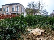 Kwestie Belcampoboom leermoment voor gemeente Deventer