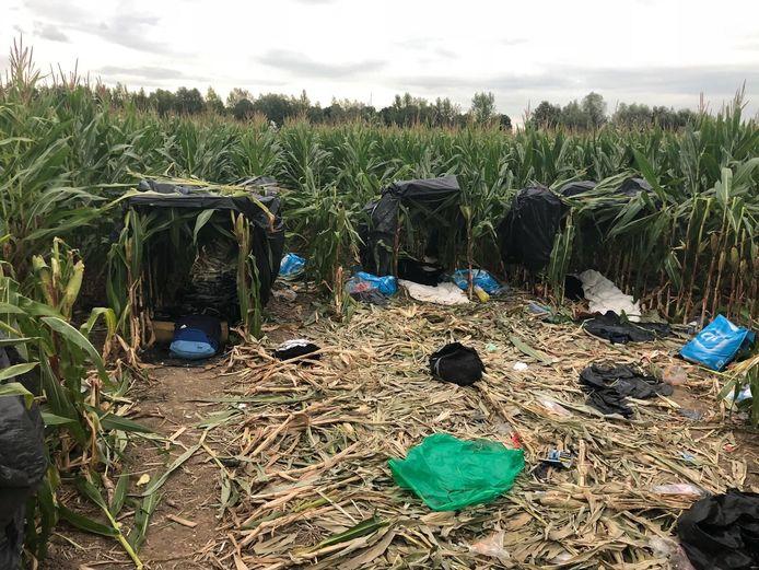 Het Albanees tentenkamp in het maisveld bij Zevenbergschen Hoek