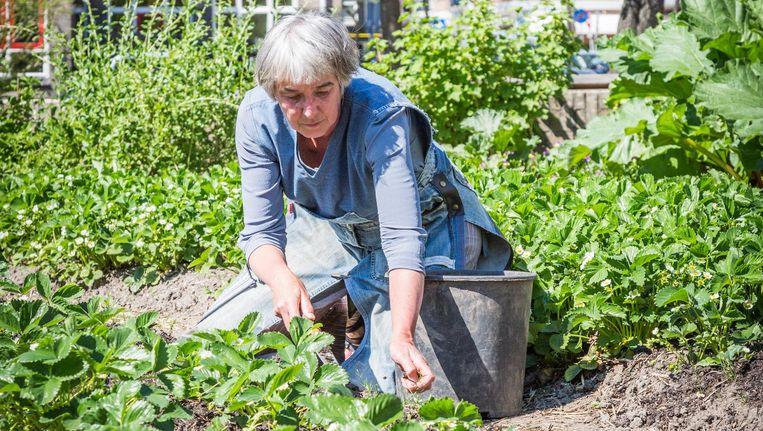 Lea Witmondt tuiniert in Het Eetbare Plantsoen Beeld Tammy van Nerum