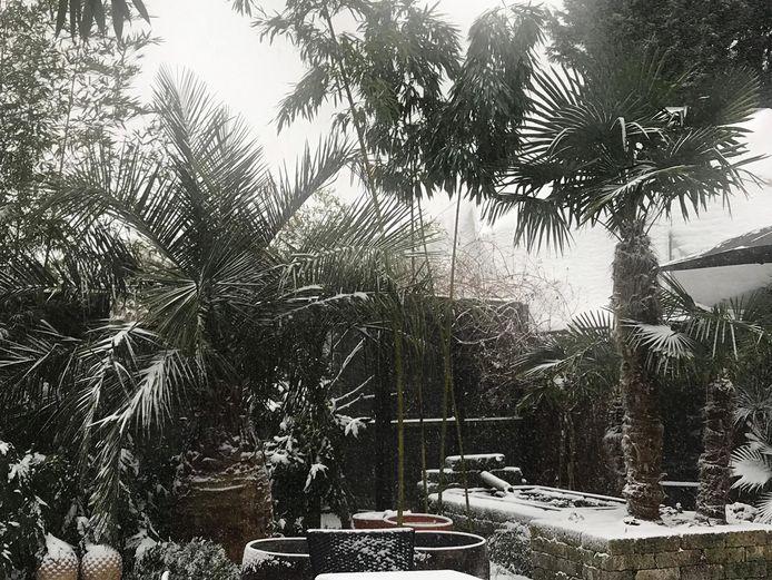 De tropische palmen hebben het koud in IJzendoorn