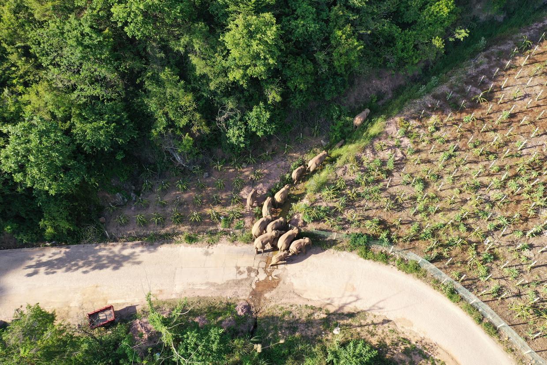 De kudde wilde olifanten trekt noordwaarts. Beeld VCG via Getty Images