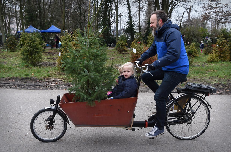 Een geadopteerde kerstboom van Adopteer een kerstboom. Na de kerst wordt de boom weer geplant en volgende kerst weer opnieuw gebruikt.  Beeld Marcel van den Bergh