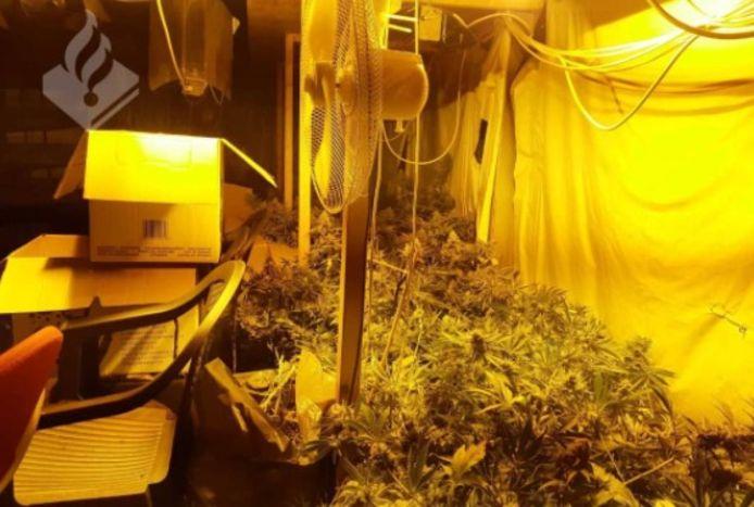 De kwekerij aan de Groningerstraat in Deventer. Volgens de politie kon je er komen via 'plafonddelen'.
