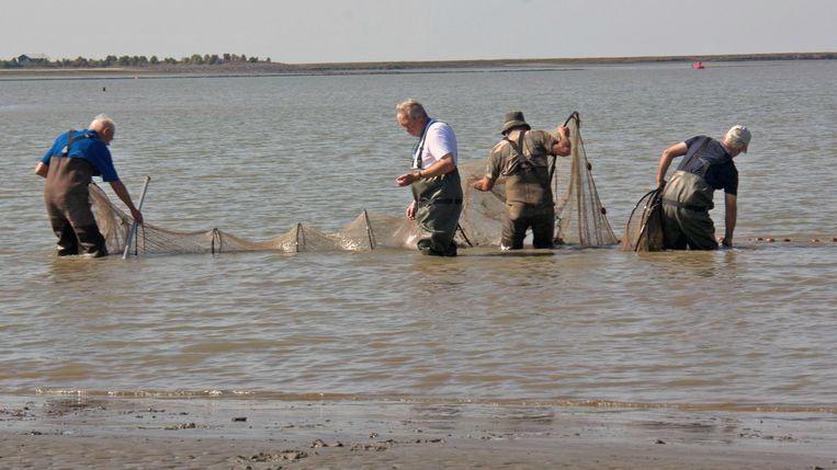 Langs de oevers worden fuiken geplaatst om de vissen te tellen.