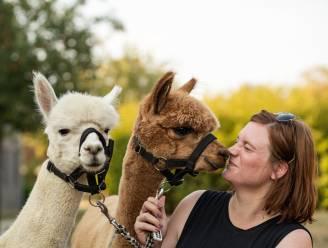"""De kracht van dieren: Elise (37), Chris (56) en Jefke (12) volgen therapie met een paard, alpaca en hond. """"Ik begon steeds meer op mezelf te vertrouwen"""""""