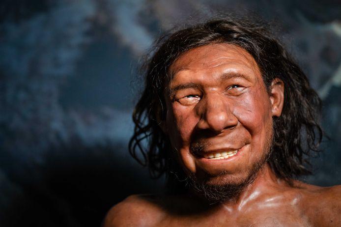 Reconstructie van de eerste neanderthaler van Nederland, met bijnaam Krijn, wordt tentoongesteld in het Rijksmuseum van Oudheden. Aan het gezicht van Krijn is jaren gewerkt door de Arnhemse gebroeders Adrie en Alfons Kennis.
