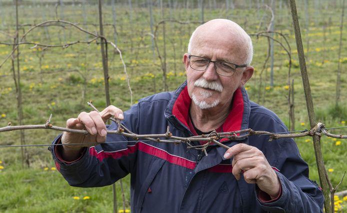 Vorst bedreigt de fruitoogst in Gelderland. De druivenstokken van wijnmaker Arend-Jan Koier in Beltrum zitten nog in de knop, maar daarmee is het gevaar nog niet geweken.