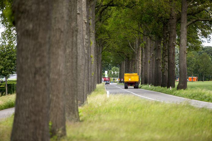 Als uit inspectie blijkt dat bomen niet langer gezond zijn en tevens een gevaar vormen voor de veiligheid gaat de provincie over tot kap.