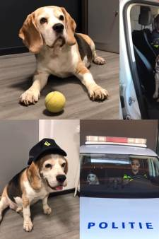Weggelopen hond mag even bij de politie in opleiding in Winterswijk