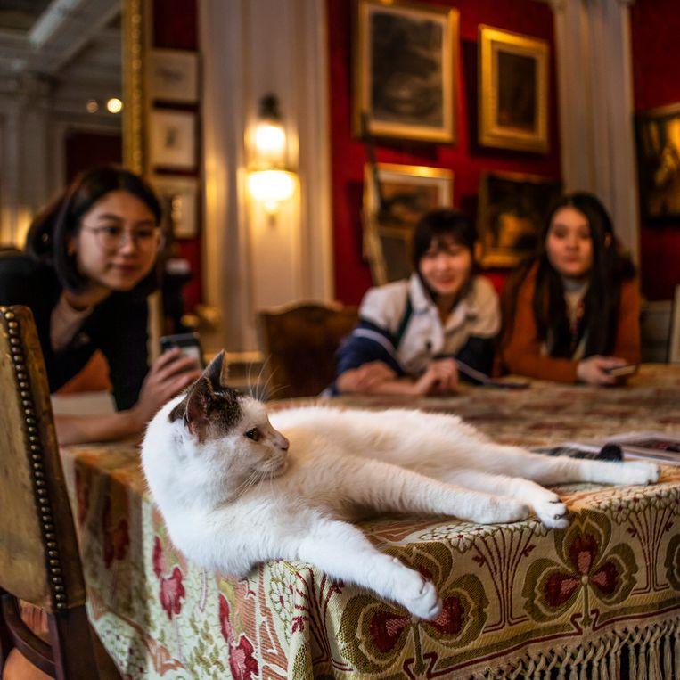 Het Kattenkabinet. Beeld Lin Woldendorp