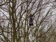 Gekapte bomen in Etten-Leur hadden last van schimmels