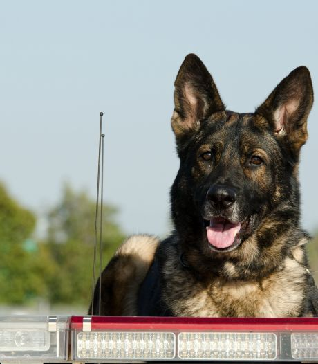 Verdachte (74) aangehouden voor mishandelen hond bij politiehondenvereniging, man al eerder op non-actief gesteld