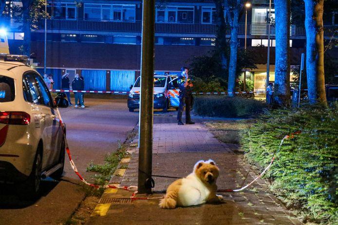 De hond bleef bij zijn baasje