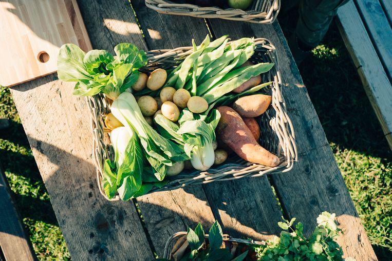 Groenten en fruit Beeld Getty Images