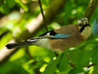 Deze vogels laten zich niet beetnemen, zelfs niet door goocheltrucs