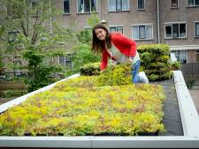 Droogte is grootste probleem voor de tuin: dit zijn de oplossingen
