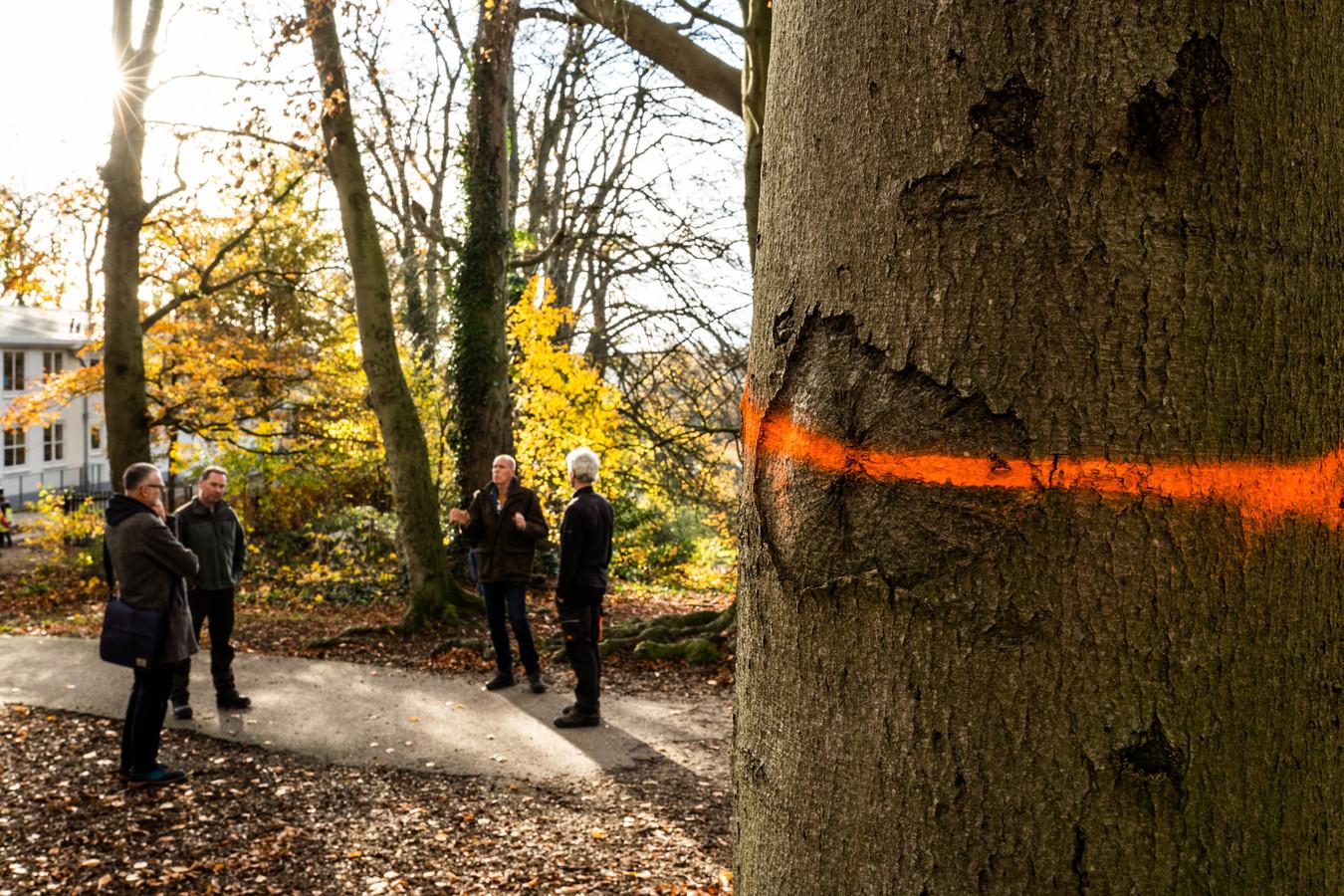 Bomen in het Arnhemse Park Klarenbeek die moeten wijken, zijn al gemerkt.