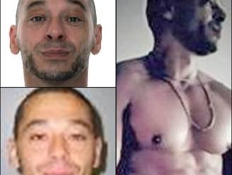 Van overvallen in Bende-stijl tot moordpoging op liefdesrivaal: dit is topgangster Lucien Annot (45), broer van moordenaar Michel (50)