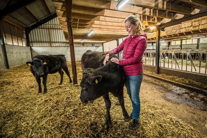 Reisblogger Mirre Oost masseert de Wakyu-koeien van de familie Nijhof.