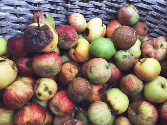 Bij hard fruit is wegsnijden vaak afdoende.
