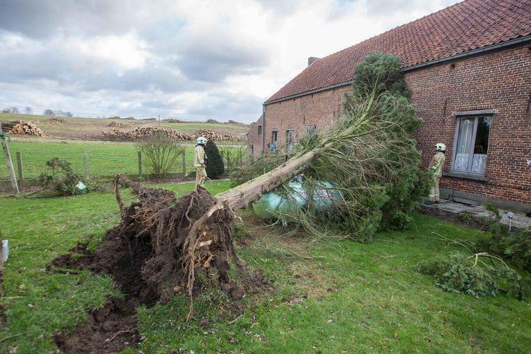 In de Schavolliestraat in Gooik kwam een boom op een propaantank terecht.