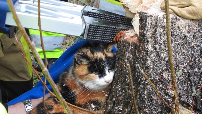 Kat zit dagenlang met pootje vast, brandweer zaagt boom om