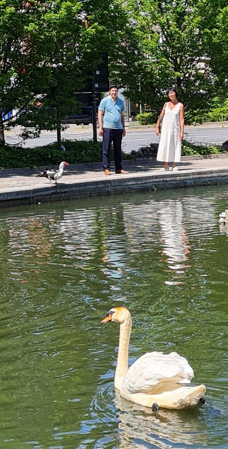 Schepen Hamid Akaychouh en burgemeester Ingrid Holemans zien dat de nieuwe mannetjeszwaan zich al goed thuis voelt in Zaventem.