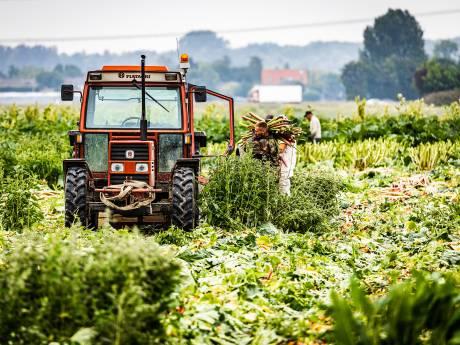 Commotie rondom extra woningbouw midden op landbouwgrond Hoeksche Waard 'storm in glas water'