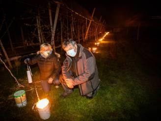 IN BEELD. Truiense fruitteler Piet Porreye vecht met vuurpotten tegen de vorst