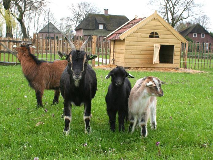 Enkele van de boerderijdieren op de Hof van Donzel in Nistelrode.