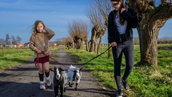 Eerste lentezonnetje goed voor een wandeling met de geitjes en paard en kar
