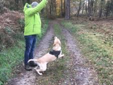 Beste Achterhoekers, er is niks mooiers dan met de hond het bos in!
