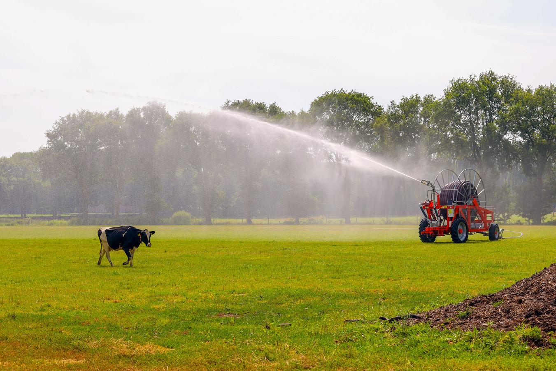 Verkoeling zoeken bij een sproei-installatie, het is even niet mogelijk met water uit sloten of beken in een groot deel van Brabant.