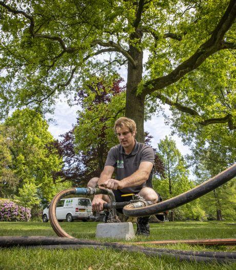 Bodem beweegt onder monumentale bomen in Rijssen: 'Na een injectie leven ze weer op'