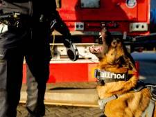 'Rotterdam is koploper in heftige bijtincidenten met politiehonden'